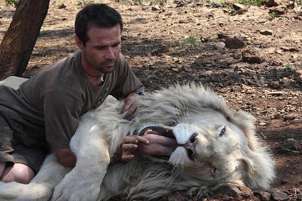 Кевин демонстрирует длину львиного языка. Фото: Denis Farrell/ AP Photo