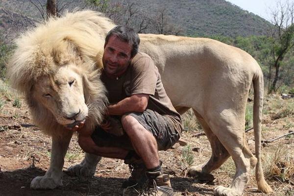 Охота на животных для трофеев – крупный бизнес в ЮАР, который приносит более 90 миллионов долларов в год. Иностранные туристы готовы платить за удовольствие отстрела загнанного в угол льва до 40 000 долларов. Фото: Denis Farrell/ AP Photo