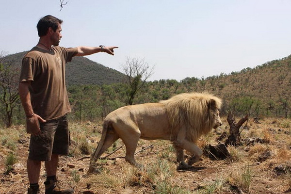 Правительство поддерживает эту «охоту» и называет ее «постоянной утилизацией естественных источников». Только в сентябре 2007 года 16394 охотников, более половины из которых из США, убили более 46 000 животных в ЮАР. Фото: Denis Farrell/ AP Photo