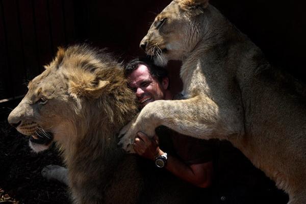 Ричардсон ломает все правила поведения при общении со львами. Как только он появляется, львы приветствуют его мурлыканием. Кевин любит чесать им брюшки. А они любят лизать ему руки своим шершавым языком. Фото: Denis Farrell/ AP Photo
