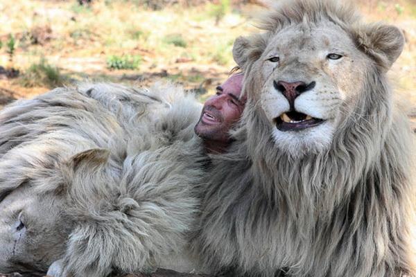 Его львы нападали на Ричардсона дважды. Один раз, во время съемок, лев по имени Тор «пригвоздил» его к клетке, приведя в ужас всю съемочную площадку. «Львы на 99% спокойны и всего на 1% смертельно опасны», - говорит Ричардсон. Фото: Denis Farrell/ AP Photo