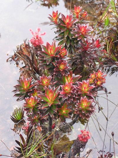 Многие виды растений и представителей фауны - эндемики. Фото с сайта: lookandtravel.ru