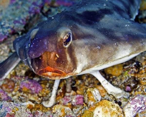 Подводный мир. Фото: trinixy.ru