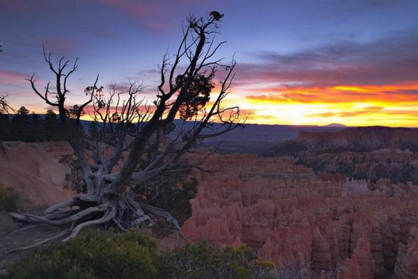 Каньон Брайс, штат Юта, США. Территория вокруг каньона Брайс стала национальным памятником в 1924, а затем, в 1928 году, национальным парком. Фото: Джейсон Сэмпсон