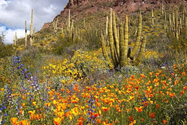 Та же местность в летний период. На переднем плане мексиканские золотистые маки. Фото: Джейсон Сэмпсон