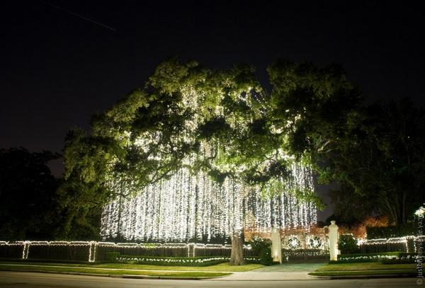 «Сосульки» на дереве. Фото с сайта: bigpicture.ru