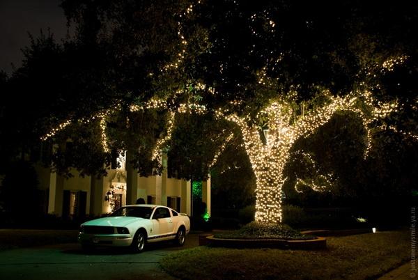 Рождественское дерево. Фото с сайта: bigpicture.ru