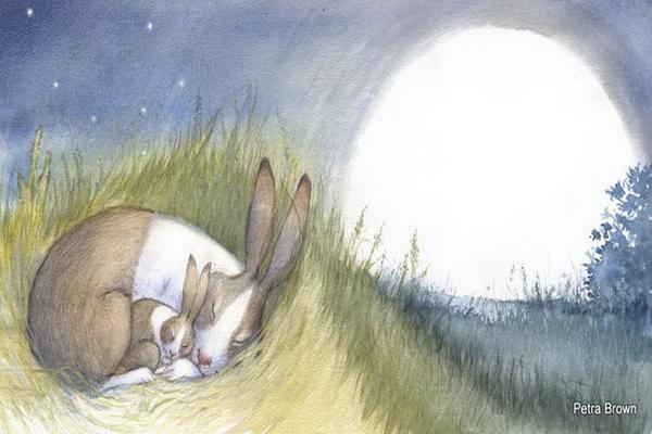 Из жизни кроликов, косолапых и не только. Фото с сайта: 2photo.ru