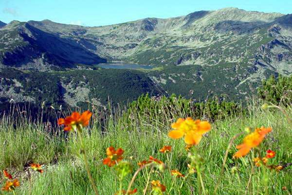 Национальный парк Болгарии Витоша. Фото: avialine.com