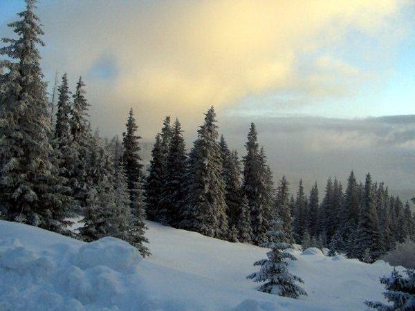 Национальный парк Болгарии Витоша. Фото: obnovlenie.ru