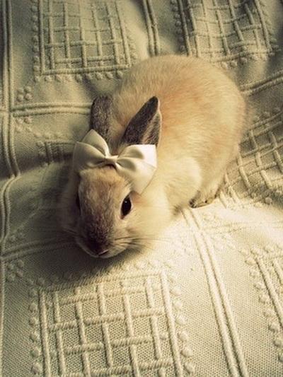 «Кролики – это не только ценный мех», но еще веселый смех. Фото с сайта: ziling.com