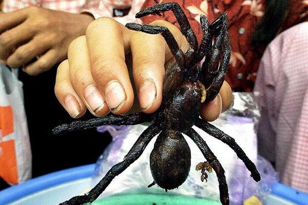 Хотите перекусить между основными приемами пищи? Как вам такой жаренный до хруста во фритюре паук? Жителям Камбоджи он очень даже по вкусу. Фото: bigpicture.ru