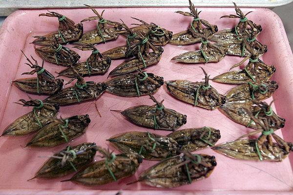 Хотя сколько людей, столько и вкусов. В Таиланде, к примеру, больше любят зажаренных водных жуков. Фото: bigpicture.ru