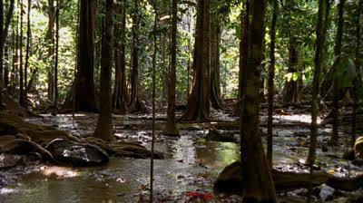 Крабы наступают. Фото: kanzhongguo.com
