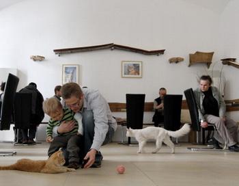 «Кошачье кафе» открылось в центре Вены. Фото: AFP/Getty Images