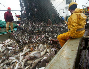 Учёные призывают запретить промышленный отлов рыбы в Северном Ледовитом океане. Фото: Marcel Mochet/AFP/Getty Images