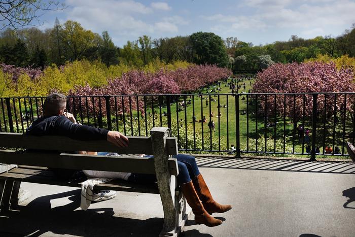 Весна пришла в Бруклинский ботанический сад. Фото: Spencer Platt/Getty Images