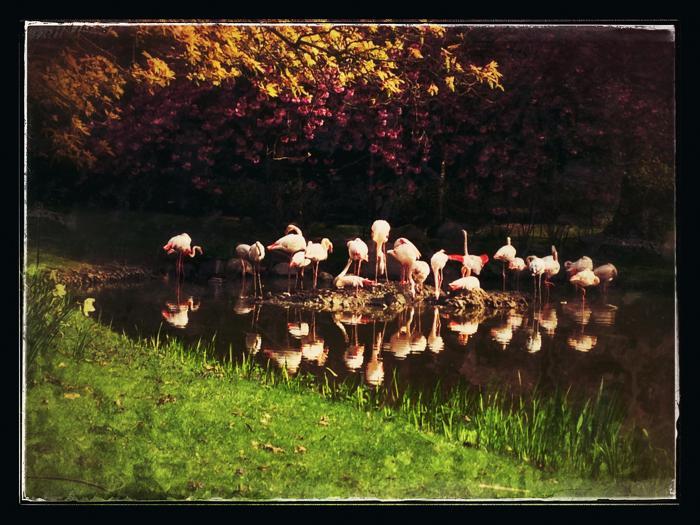 Фламинго наслаждаются солнцем в зоопарке Хагенбек (Германия). Фото: Joern Pollex/Getty Images