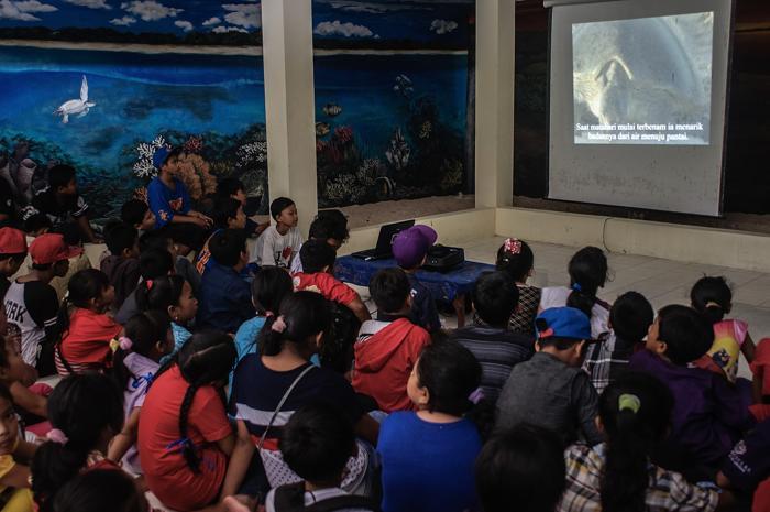 Образовательный центр сохранения черепах на Бали занимается спасением исчезающих морских черепах. Фото: Putu Sayoga/Getty Images