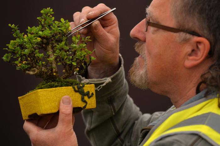 Садоводы готовят свои работы на королевскую выставку в Челси. Фото: BEN STANSALL/AFP/Getty Images
