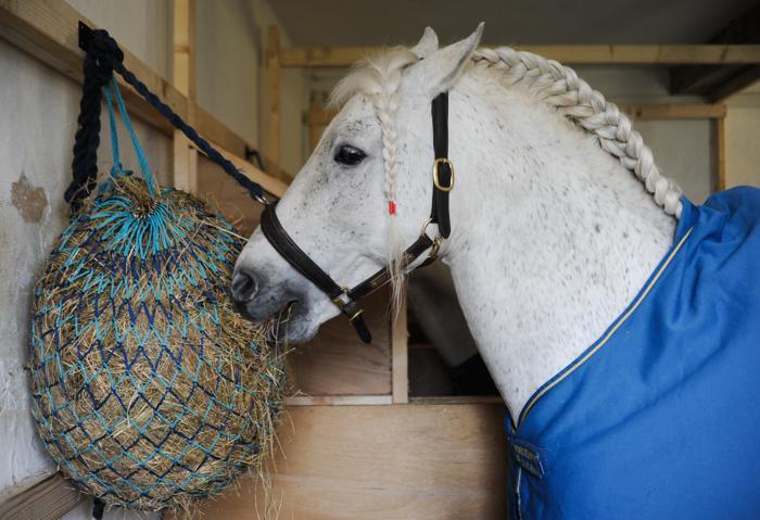 Танцующие лошади вернулись в английский замок Болзовер. Фото: Ian Forsyth/Getty Images