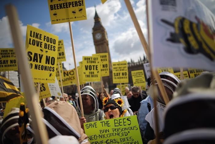 В Великобритании люди выступили против убийства пчёл пестицидами. Фото: Dan Kitwood/Getty Images