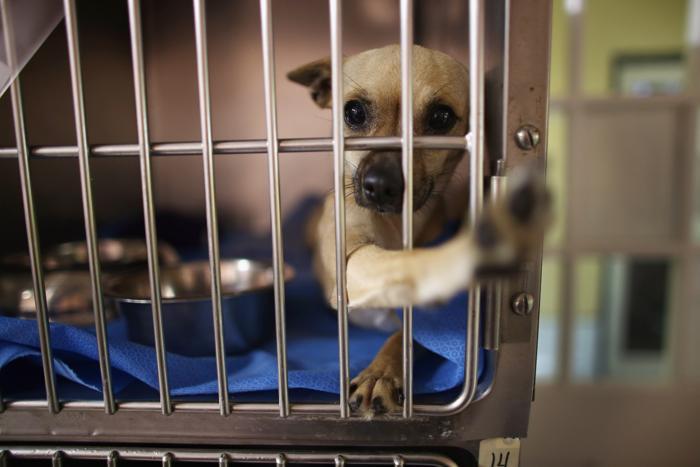 Животные, потерявшие свой дом и хозяев при торнадо в Оклахоме, получили заботу и приют. Фото: Joe Raedle/Getty Images