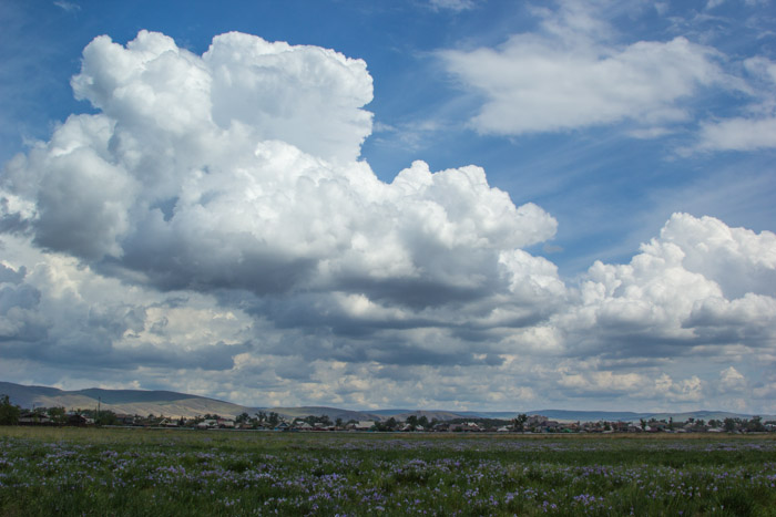 Воздушная «вата» облаков на фоне цветущей пикульки. Фото: Сергей Тугужеков/Великая Эпоха (The Epoch Times)