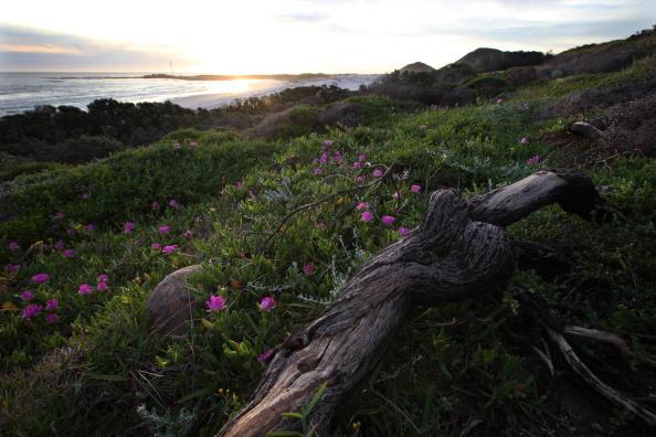 Природа Южной Африки. Фото: Dan Kitwood/Getty Images