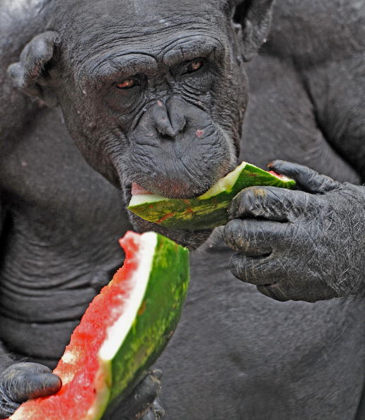 В зоопарке  Таронга. Фото:  Rick Stevens/Taronga Zoo via Getty Images