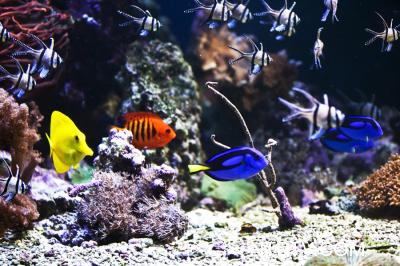 Рыбки в шведском океанариуме. Фото: NTDTV.com
