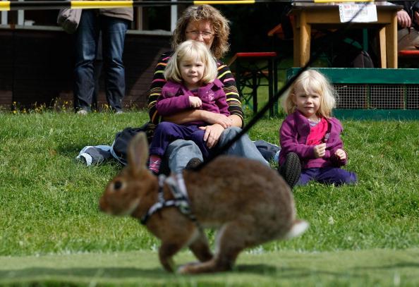 Кроличий турнир в Германии. Фото: Ralph Orlowski/Getty Images