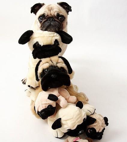 Животные тоже любят игрушки. Фото с kanzhongguo.com