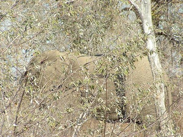 Мимикрия в природе. Фото с сайта new.ba-bamail.co.il