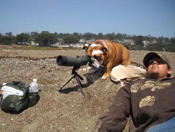 И чего это хозяин там увидел? Непонятно. Фото с сайта animalworld.com.ua