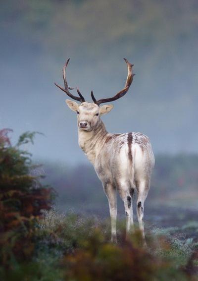 Фото с сайта animalworld.com.ua