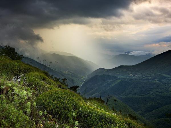 Красота дикой природы. Фото с сайта animalworld.com.ua