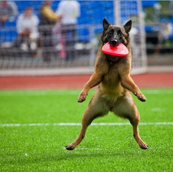 Взя…аал! Фото с сайта animalworld.com.ua