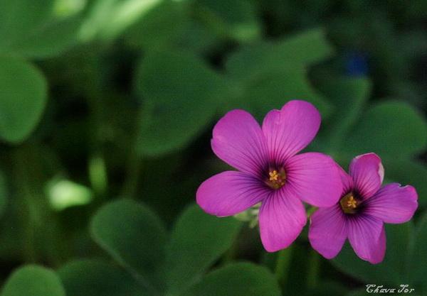орящие цветы. Фото: Хава ТОР/Великая Эпоха