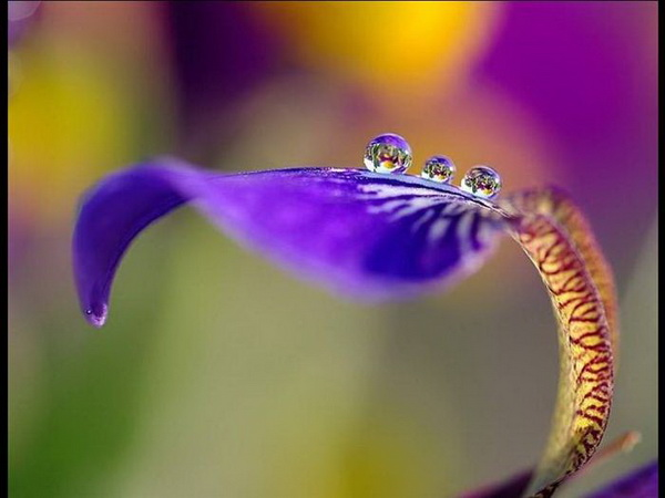Цветы с душой к 8 марта. Фото с сайта ba-bamail