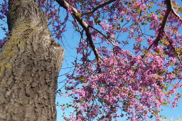 Невеста леса в цвету. Фото: Хава Тор/Великая Эпоха (The Epoch Times)