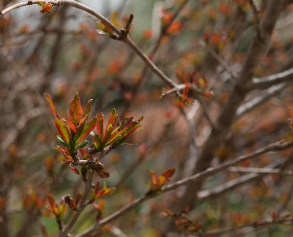 Весенние краски кибуца Лави. Фото: Хава ТОР/Великая Эпоха