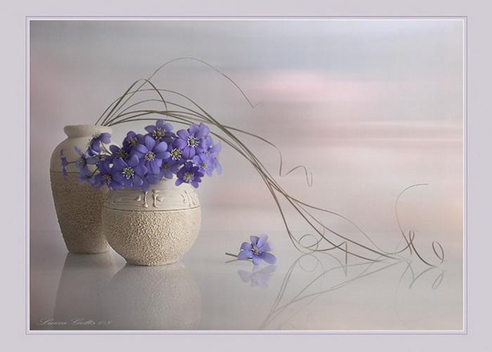 Натюрморты с букетами Луизы Гельтс