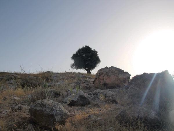 Олива. Фото:Хава ТОР/Великая Эпоха