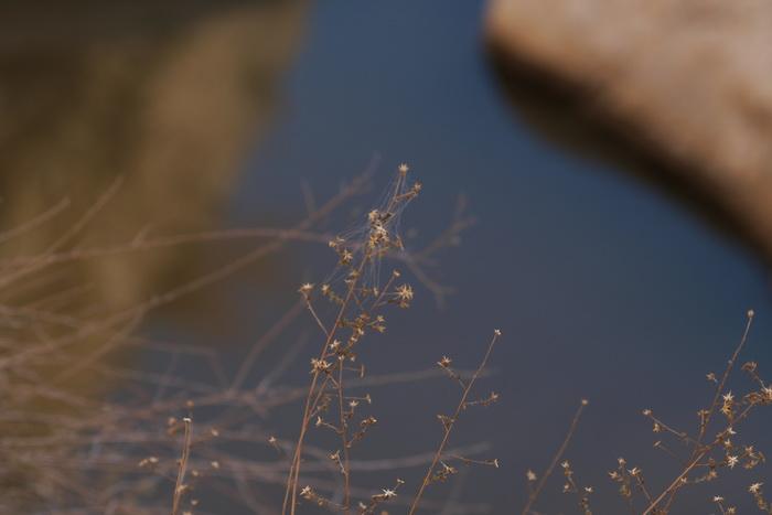 За анемонами. Фото: Хава Тор/Великая Эпоха (The Epoch Times)