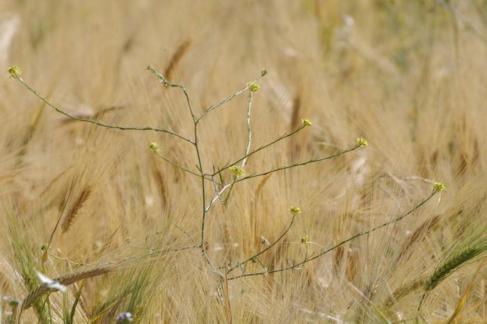 Во поле выйду и… Фото: Хава Тор/Великая Эпоха (The Epoch Times)