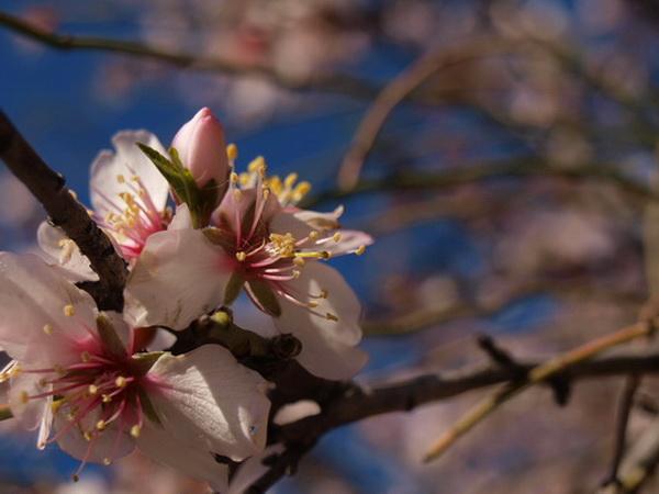 Весна - невеста Солнца. Фото: Хава Тор/Великая Эпоха (The Epoch Times)