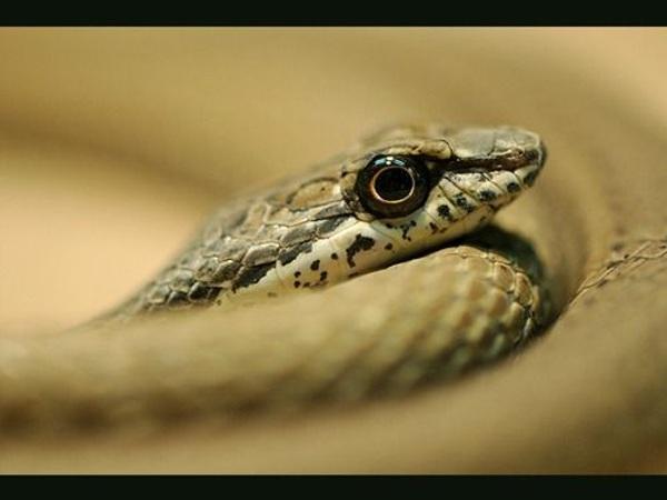 Природа змеи. Фото: xaxor.com
