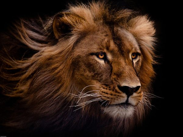 Животные и эмоции. Фото:xaxor.com