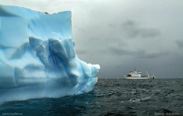 Антарктида. Фото: Анатолий Белощин/tecdive.ru